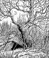 Campaign Backdrop - Forests & Woodlands
