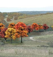 "Deciduous Trees - Fall Colors (3/4"" - 2"")"