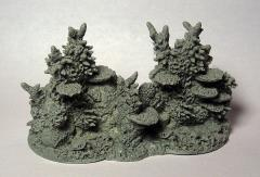 Coral Reef Section