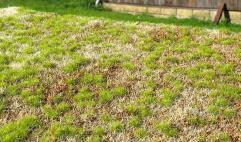 Grass Mats - Spring Steppe