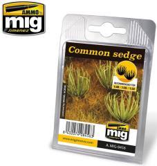 Plants - Common Sedge