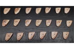 Elvian Swordsmen Shield