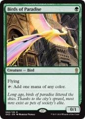 Birds of Paradise (R)