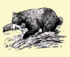 Bestiary Article - Bears