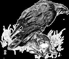 Bestiary Article - Birds