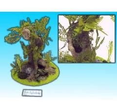 Old Mangrove Tree