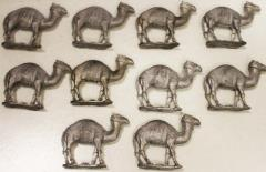 Camels - Walking Collection