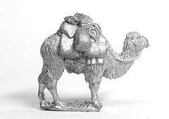 Pack Camels