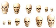 Skulls Set #2
