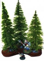 Fir Trees - Mature