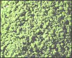 Vegetation - Light Green