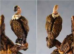 Deadwood Vulture