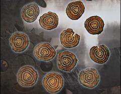 Woodlands Shields - Tree Slice