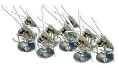 Rippler Bug Mega-Swarm