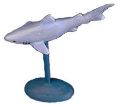 Aquatics - Great White Sharks, Shiver