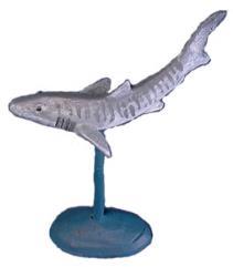 Aquatics - Tiger Sharks, Shiver