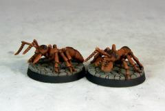 Giant Soldier Ants