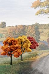 "Deciduous Trees - Fall Colors (3"" - 5"")"