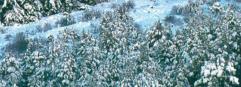 Foam & Snow