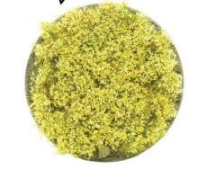 Daffodil Tufts