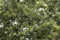 Fine Leaf Foliage - Olive Green
