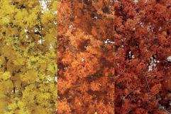Fine Leaf Foliage - Fall Mix