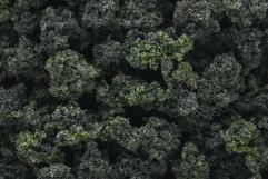 Forest Blend (Shaker)