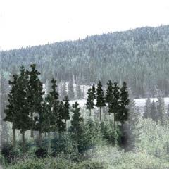 "Pine Trees - Conifer Colors (2 1/2"" - 4"")"