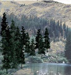 "Pine Trees - Conifer Colors (4"" - 6"")"