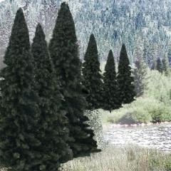 "Fir Trees - Evergreen Blend (2"" - 4"")"