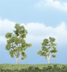 """Premium Trees - Sycamore (3"""" & 2 1/4"""")"""