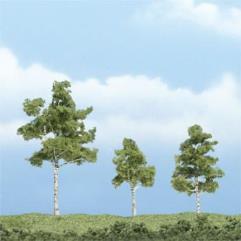 """Premium Trees - Paper Birch (2 3/4"""", 2 1/4"""", & 1 2/2"""")"""