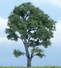 """Premium Trees - Maple (4 1/2"""")"""