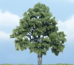 """Premium Trees - Beech (4"""")"""