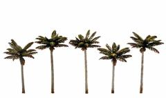 "Palm Trees (3"" - 3 3/4"")"