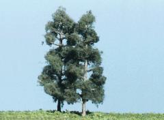 "4 1/2"" Columnar Pine"