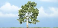 """Premium Trees - Sycamore (3 7/8"""")"""