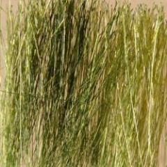 Field Grass - Green