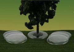 Tree Bases - Transparent