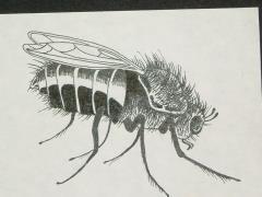 "A7 - Black Fly - 4"" x 3"" Original Ink"